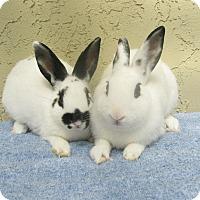 Adopt A Pet :: Avaril & Pancake - Bonita, CA