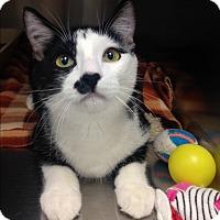 Adopt A Pet :: Buster - Newport Beach, CA