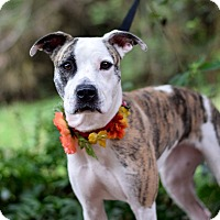 Adopt A Pet :: Avery - Baton Rouge, LA