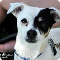 Adopt A Pet :: Bogo - Seattle, WA