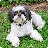 Adopt A Pet :: HATTIE - Los Angeles, CA