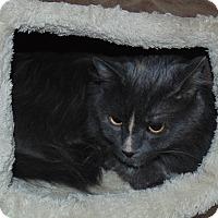 Adopt A Pet :: Cracie - Jackson, MO