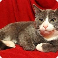 Adopt A Pet :: Mylo - Garland, TX