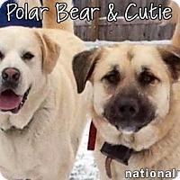 Adopt A Pet :: Cutie & PolarBear in NY - Beacon, NY