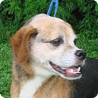 Adopt A Pet :: Deliah - Erwin, TN