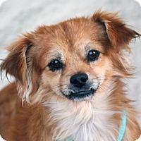 Adopt A Pet :: Jiro - Palmdale, CA