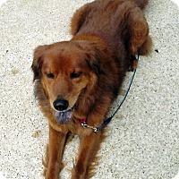 Adopt A Pet :: Sabrina - BIRMINGHAM, AL