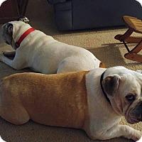 Adopt A Pet :: Cookie & Odie - Odessa, FL