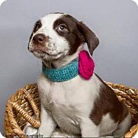 Adopt A Pet :: Fiona - Jacksonville, NC