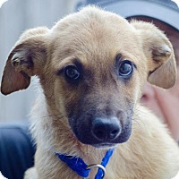 Adopt A Pet :: Silas - Enfield, CT