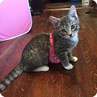 Adopt A Pet :: Jeff - Barrington Hills, IL