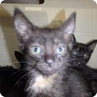 Adopt A Pet :: Dahlia #160276 - Apple Valley, CA