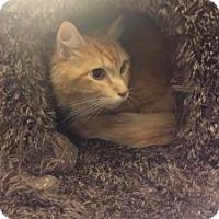 Adopt A Pet :: Rusty - Wasilla, AK