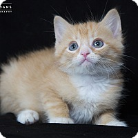 Adopt A Pet :: Gobble - Nashville, TN