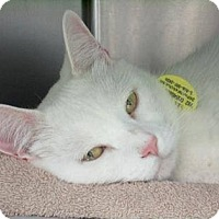 Adopt A Pet :: Yue - THORNHILL, ON