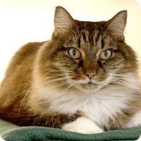 Adopt A Pet :: Sammy - Harrisonburg, VA