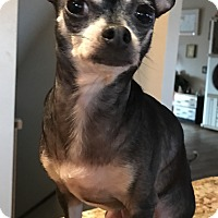 Adopt A Pet :: Tammy - Palm Harbor, FL