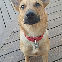 Adopt A Pet :: Keanu - Baltimore, MD
