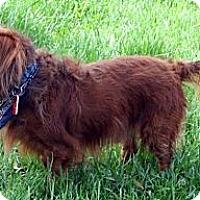 Adopt A Pet :: Banjo - Toronto, ON