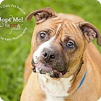 Adopt A Pet :: Kobe - Medina, OH