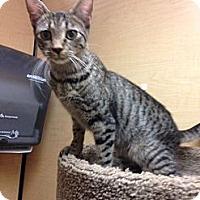 Adopt A Pet :: Jolie - Monroe, GA