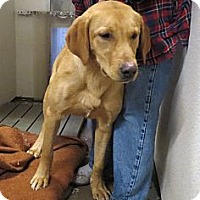 Adopt A Pet :: Buddy - Geneseo, IL