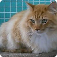 Adopt A Pet :: Malone - Colorado Springs, CO