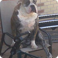 Adopt A Pet :: Gunny ~ Courtesy listing - San Angelo, TX