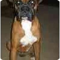 Adopt A Pet :: Dougan - Albany, GA
