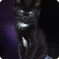 Adopt A Pet :: Lola - Byron Center, MI