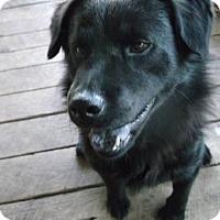 Adopt A Pet :: Corbit - San Antonio, TX