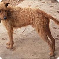 Adopt A Pet :: Ernie - Meet Him - Norwalk, CT
