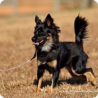 Adopt A Pet :: Fancy - Dacula, GA