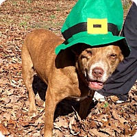 Shar Pei/Labrador Retriever Mix Dog for adoption in Tullahoma, Tennessee - Gabriel