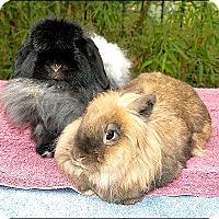 Adopt A Pet :: Chessie & Dublin - Phoenix, AZ