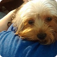 Adopt A Pet :: Karissa - Lorain, OH