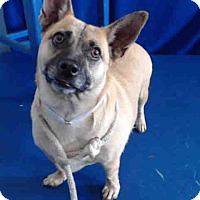 Adopt A Pet :: Simba - Lomita, CA