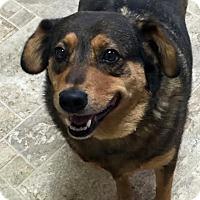Adopt A Pet :: Maggie - Donaldsonville, LA