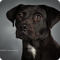 Adopt A Pet :: Belle - Nashville, TN