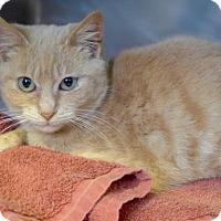 Adopt A Pet :: C-68407 Icarus - Westampton, NJ