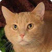 Adopt A Pet :: Artemis - mishawaka, IN