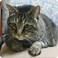 Adopt A Pet :: Munchka - Gary, IN