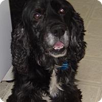 Adopt A Pet :: Emitt - Sacramento, CA