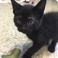 Adopt A Pet :: Lexus - Medina, OH
