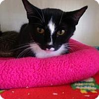 Adopt A Pet :: Moonstar - Fort Collins, CO