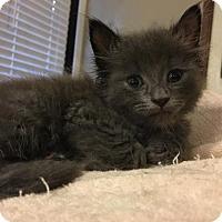 Adopt A Pet :: Jaime - Dallas, TX