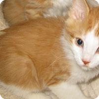 Adopt A Pet :: Bamboo - Bedford, VA