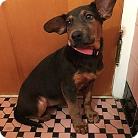 Adopt A Pet :: Nilla - Lancaster, PA
