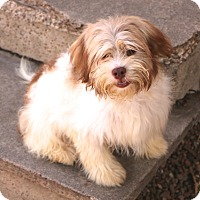 Adopt A Pet :: Phoenix - Woonsocket, RI