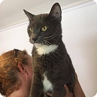 Adopt A Pet :: Bud - Hanna City, IL